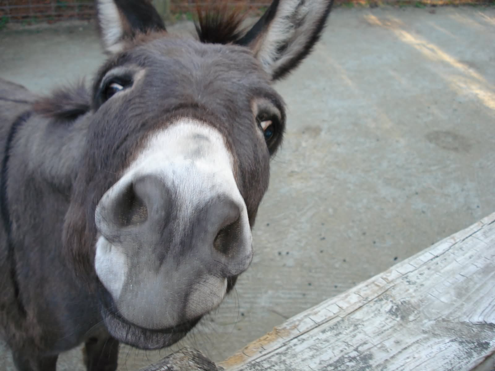 Donkey With Closeup Face Funny Image