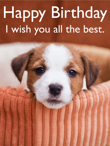 30 Awesome Cute Animal Birthday Greeting Card Images