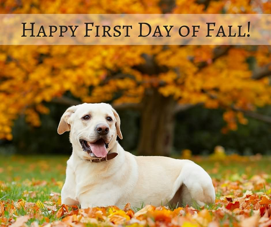 Awesome 20 Best Happy First Day Of Fall 2017 Wishes And Greetings