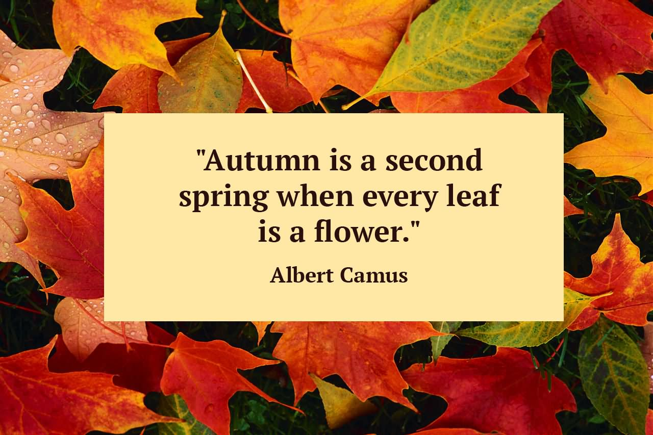 Autumn Is A Second Spring When Ever Leaf Is A Flower Happy First Day Of Fall