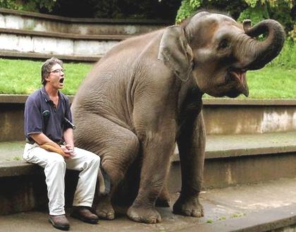 Most Funny Elephant Picture