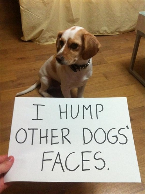 50 Best Funny Dog Quotes, Meme Images And Pictures - Funnyexpo