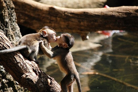 50 Most Cutest Beautiful Animals Kissing Pictures Funnyexpo