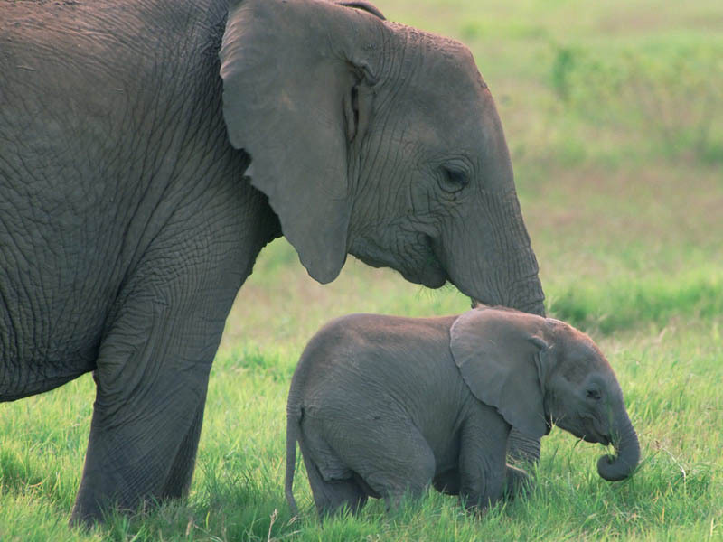 Cute elephants wallpaper