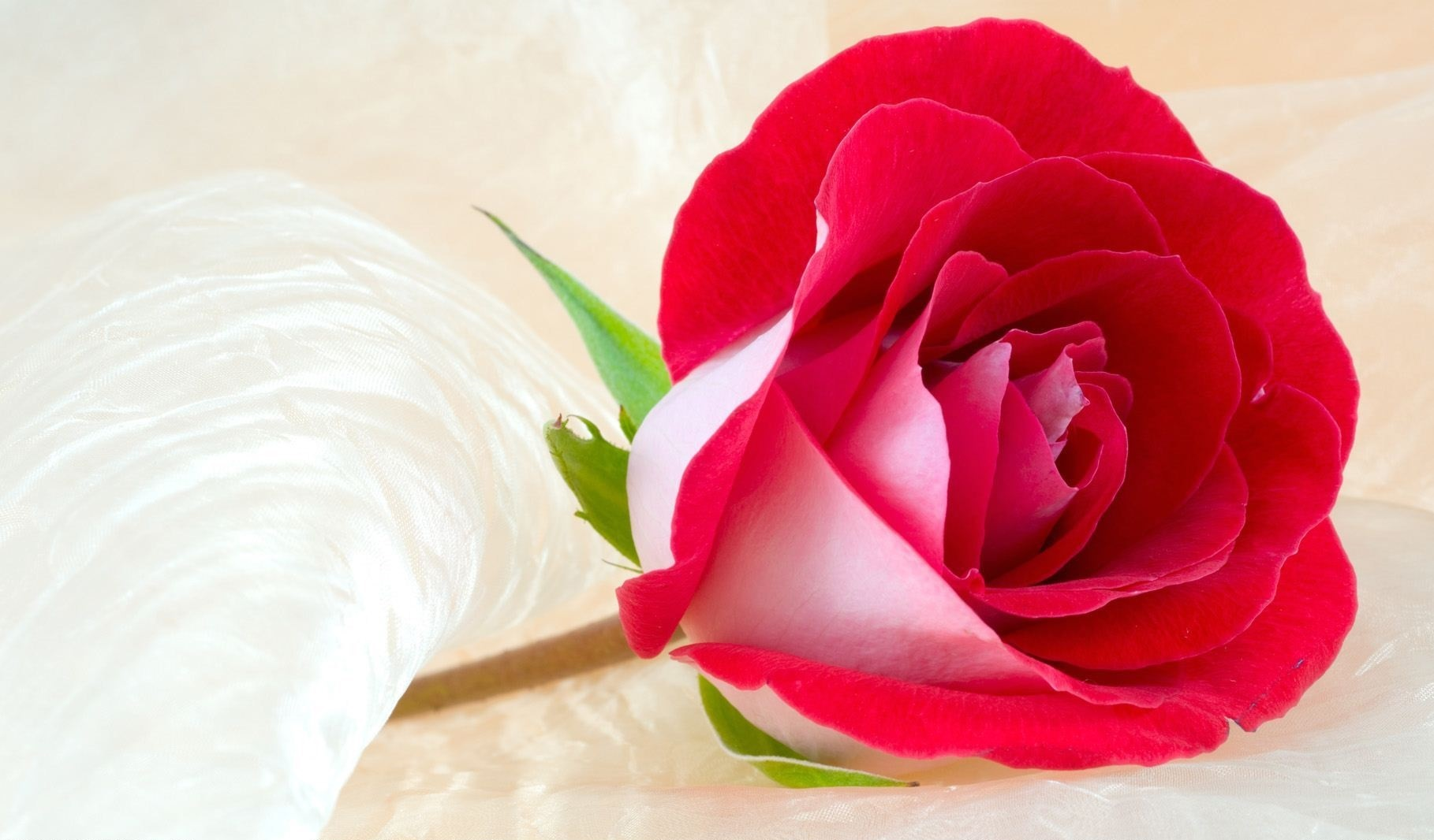 50 most beautiful happy rose day 2018 wishes images pictures amazing rose flower for girl friend boy friend happy rose day wish image with beautiful flowers izmirmasajfo